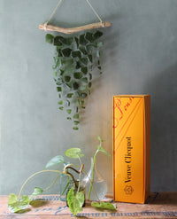 Sea Glass Mobile -Veuve Clicquot