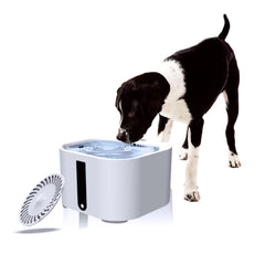 Dog Cat Drinking Water Fountain