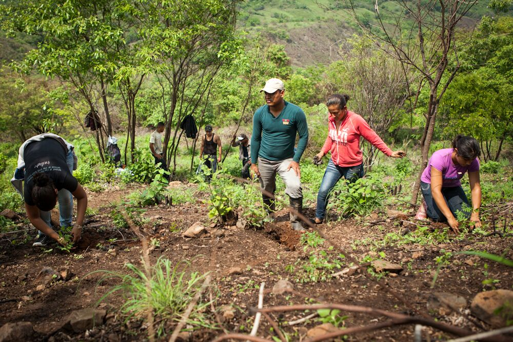 CommuniTree reforestation project in Nicaragua Aquapax Water Cartons