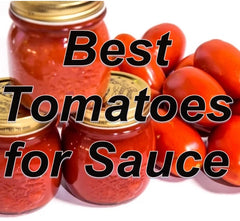 Best Tomatoes for Sauces