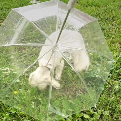 Dog Umbrella (536302321728)