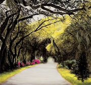 Through the wooden path. Magnolia Plantation By Jill Tishman