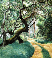 Path through the woods -The Old Oak By Jill Tishman