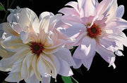 Delightful Dahlias By Brian Davis