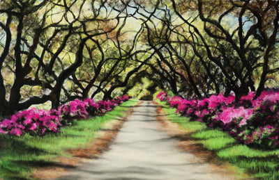 Tree lined path...Memories of Louisana By Jill Tishman