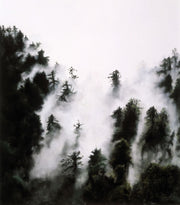 Fog and Redwoods By Jill Tishman
