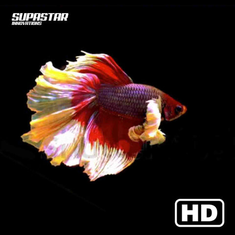 supastar-innovations-led-fan-3d-hologram-content-fishes-aquarium-black-background-fish-supastarstore-luxury-interior