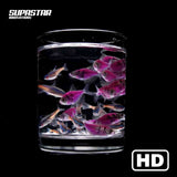 supastar-innovations-led-fan-3d-hologram-content-fishes-aquarium-black-background-supastarstore-luxury-interior
