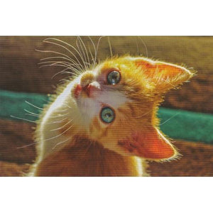 Kitten Note Cards with Envelopes (48 Pack) with Free Local Delivery in Champaign & Vermilion County IL.