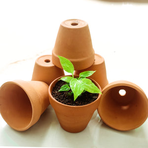 "Terracota Pot 2"" - Pack of 12"