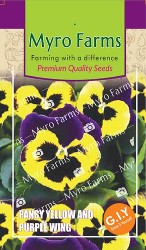 Pansy Yellow and Purple