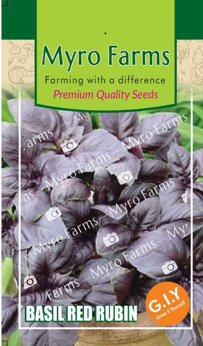 Premium Herb Seeds - Purple Basil
