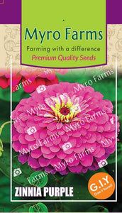 Zinnia Purple