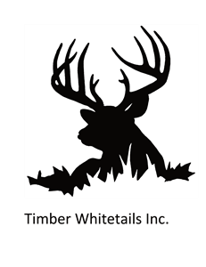 Timber Whitetails