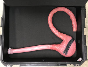 Upper Endoscopic Canine Anatomy Model