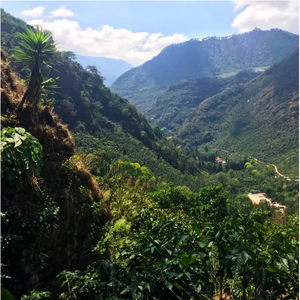 Guatemala San Antonio / The Coffee Ride / Boulder