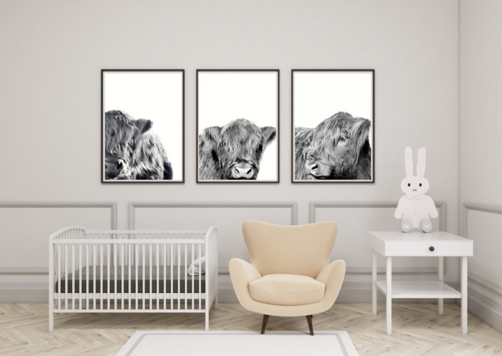 "Set of Three Highland Cow ""Teddy"" Prints"