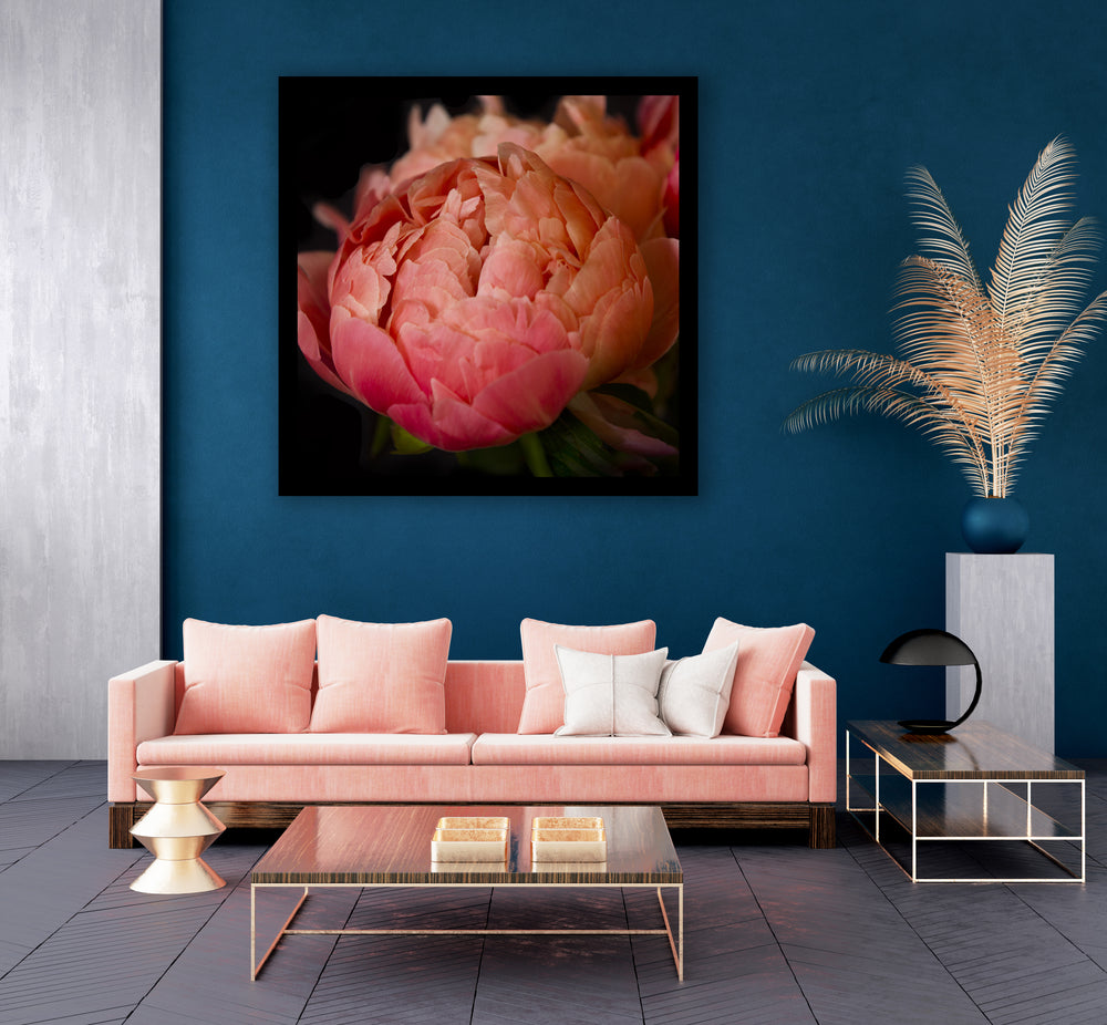 The Coral Peony