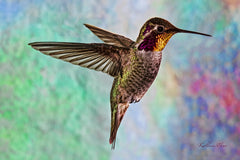Photograph of hummingbird basking in the sun.