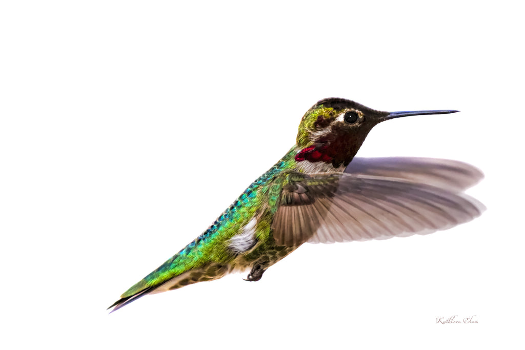 Photograph of hummingbird in mid-air.
