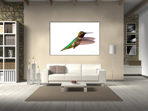 Picture of Bird, James Bird hanging in a room.