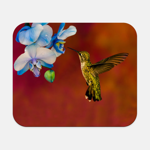 Blue Orchid Feast photograph printed on a rectangular mouse pad.