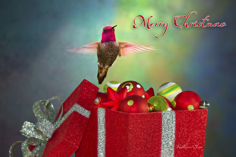 Photograph of hummingbird and Christmas ornaments.