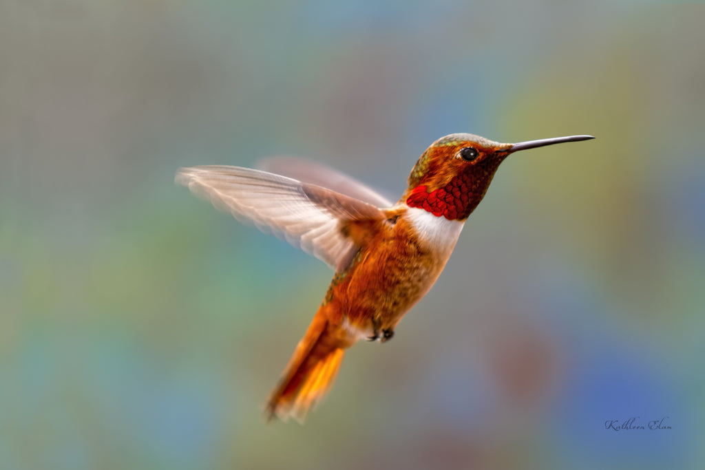 Photograph of a colorful hummingbird mid-air.