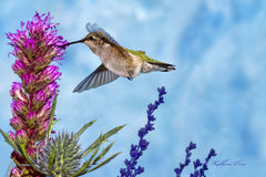 Photograph of a hummingbird from down below.