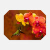 Image of Orchid Attraction photograph printed on a place mat.