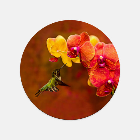 Orchid Attraction photograph printed on a round mouse pad.