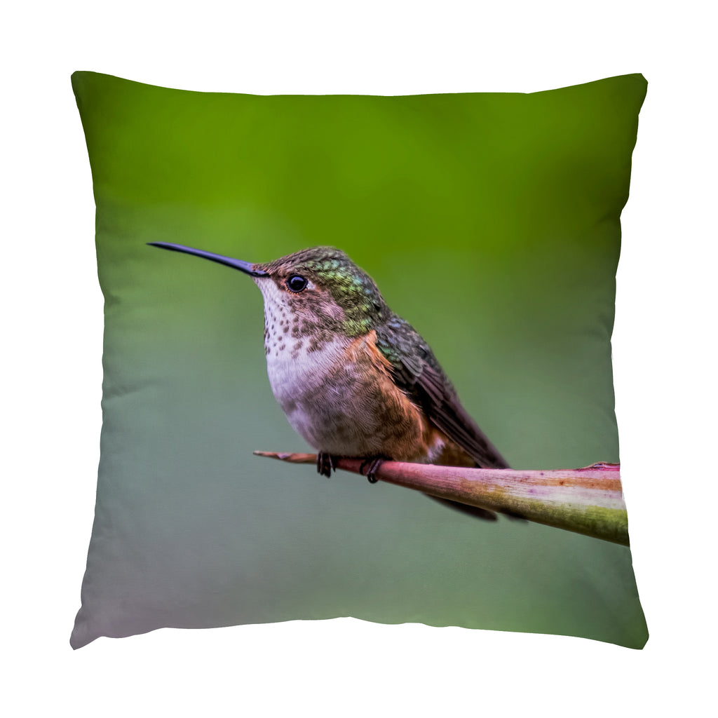 "Shelter From The Rain hummingbird photograph on a 20"" square pillow."