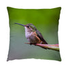 "Image of Shelter From The Rain hummingbird photograph on a 16"" square pillow."