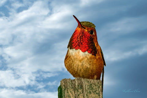Photograph of stunning hummingbird on a trellis post.