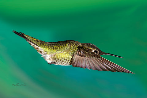Photograph of a hummingbird mid-air and very close-up.