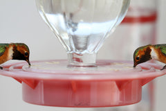 Photograph of two almost identical hummingbirds on the same feeder.