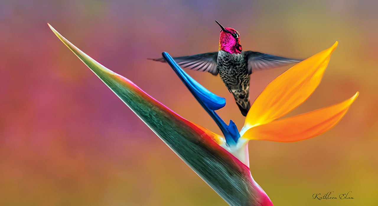 Picture of hummingbird and bird of paradise.