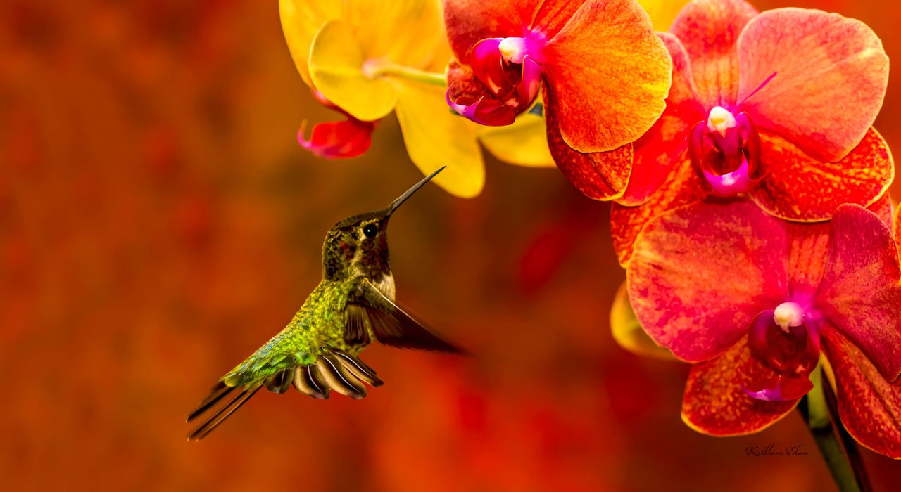 Picture of hummingbird and orchids