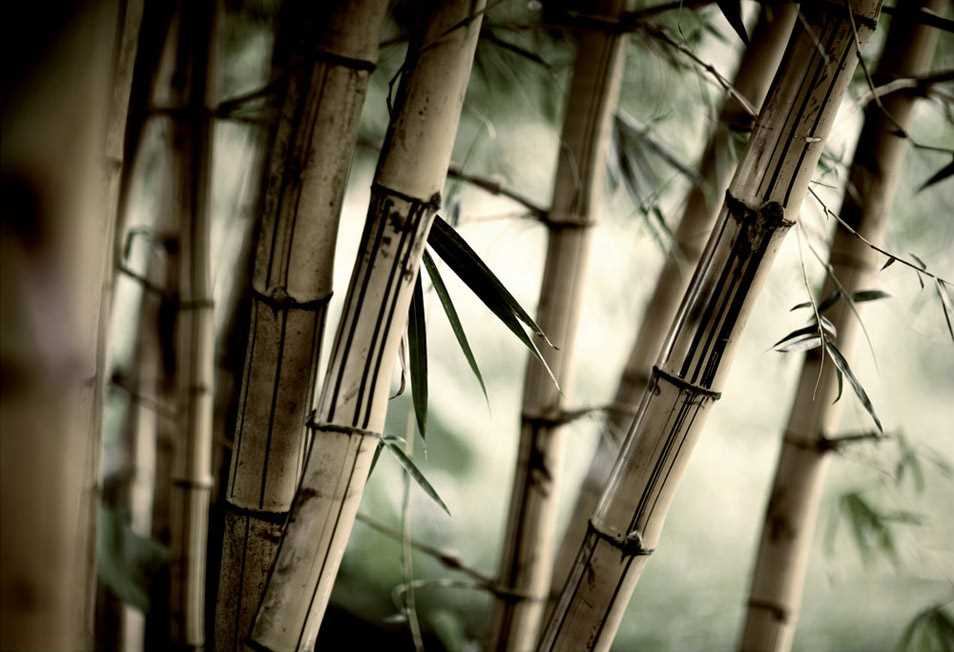 Quadri in Plexiglass Bamboo MyCollection