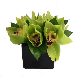 Cymbidium Orchid Pot - Broadfield Flowers Florist Lincoln, Christchurch