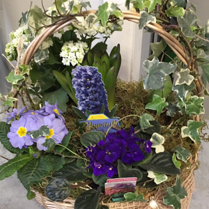 Basket of Plants - Broadfield Flowers Florist Lincoln, Christchurch