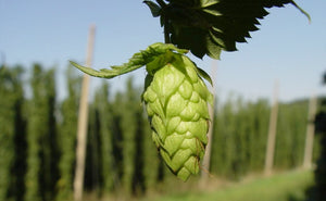 Hoppy New Beer - January 2017 - BeerCo Brewing News