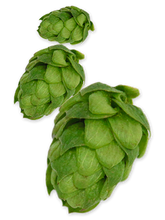 hop-northern-brewer