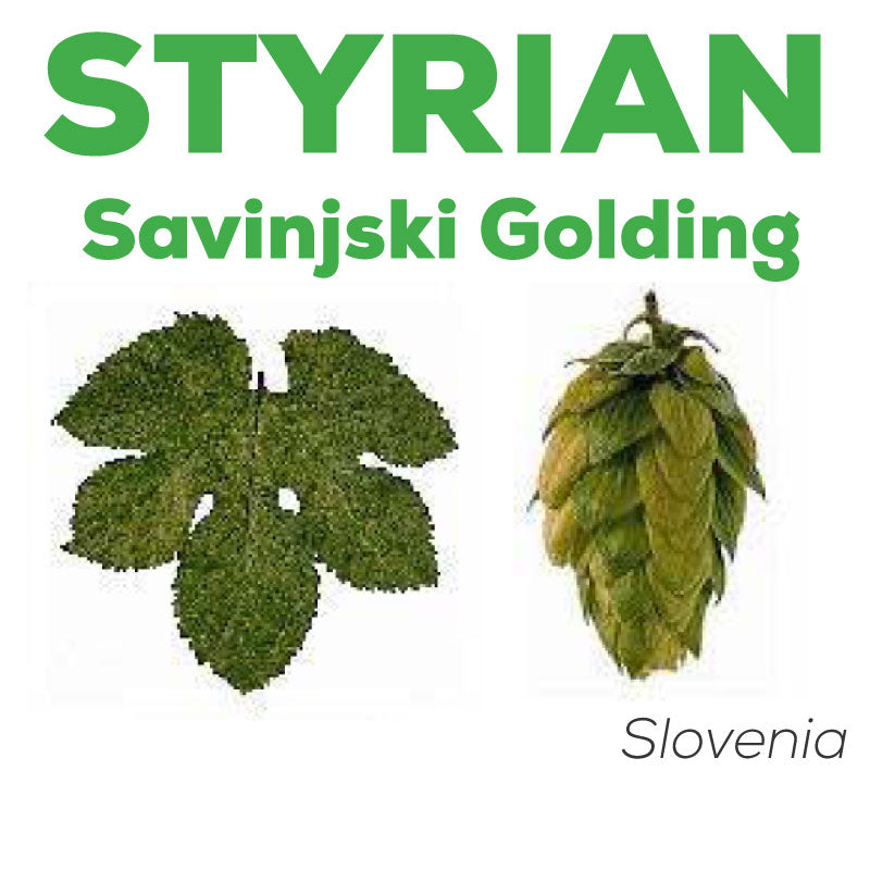 styrian golding hops profile