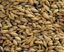 Gladfield Big O - Oat Malt - NEW!