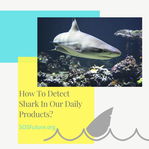 How To Detect Shark In Our Daily Products?