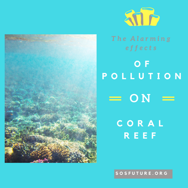 The Alarming Effects Of Pollution On Coral Reef