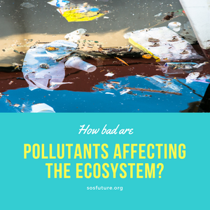 How Bad Are Pollutants Affecting The Ecosystem?