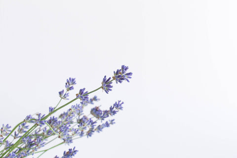 lavender which is great as a natural sleep aid