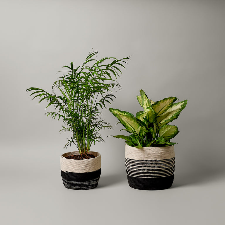 Medium and large black and white striped rope planter from MOkun